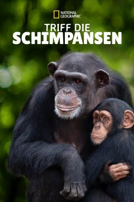 Meet the Chimps - Staffel 1 (2020)
